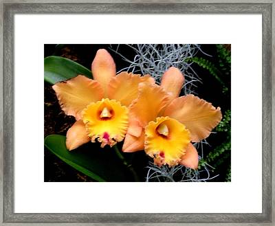 Peachy Couple Framed Print by Jeanette Oberholtzer