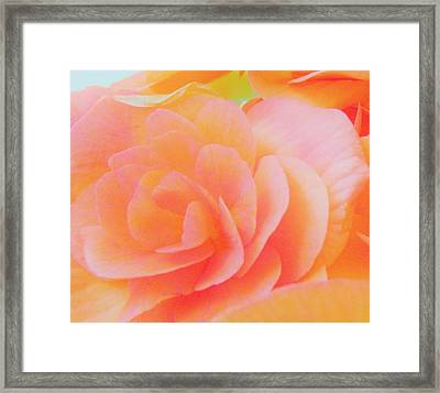 Peachy Perfection Framed Print