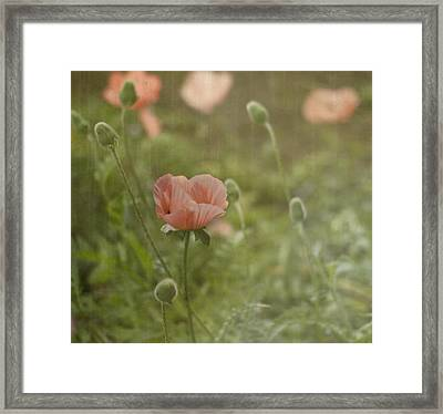 Peachy Poppies Framed Print by Rebecca Cozart