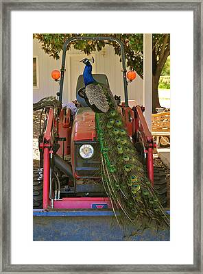 Peacock And His Ride Framed Print