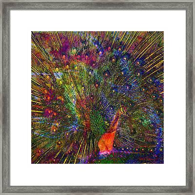 Peacock Framed Print by Barbara Berney