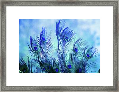 Peacock Beauty Framed Print