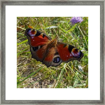 Framed Print featuring the photograph Peacock Butterfly by Jean Bernard Roussilhe