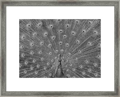 Framed Print featuring the photograph Peacock Fanfare - Black And White by Diane Alexander