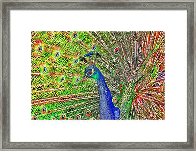 Peacock Fanned Tail Feathers Framed Print by Tracie Kaska