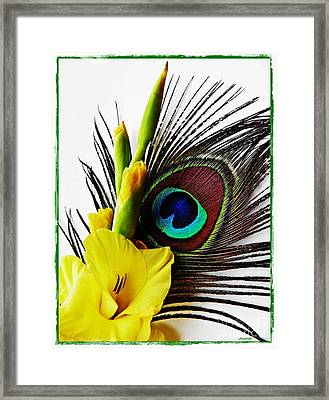 Peacock Feather And Gladiola 3 Framed Print