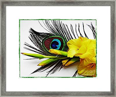 Peacock Feather And Gladiola 4 Framed Print by Sarah Loft