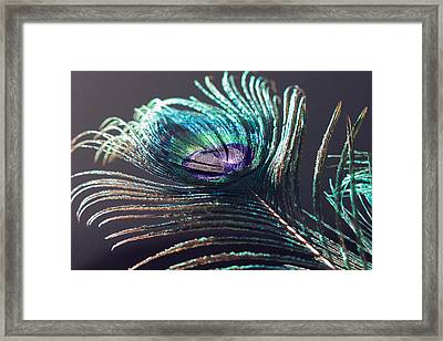 Peacock Feather In Sun Light Framed Print