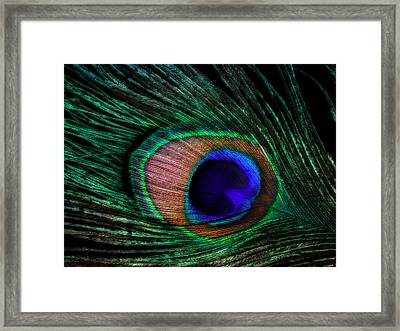 Peacock Feather Framed Print by June Marie Sobrito