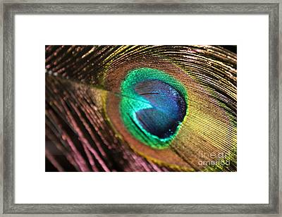 Framed Print featuring the photograph Peacock Feather by Terri Thompson
