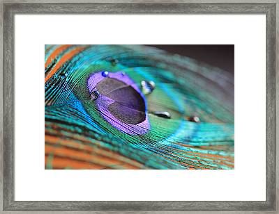 Peacock Feather With Water Drops Framed Print