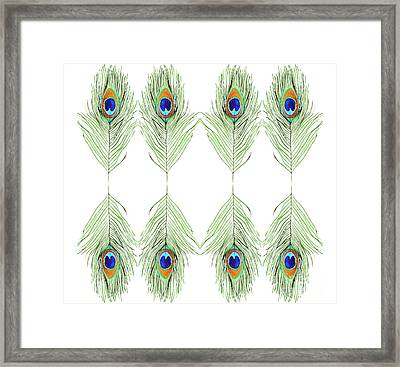 Peacock Feathers Framed Print by D Renee Wilson