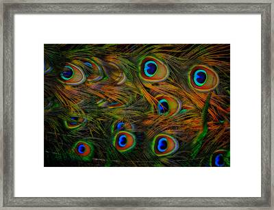 Framed Print featuring the photograph Peacock Feathers by Harry Spitz