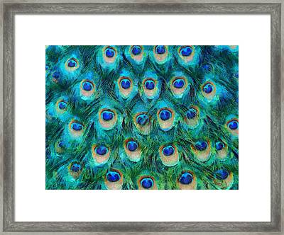 Peacock Feathers Framed Print by Nikki Marie Smith