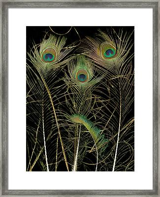 Peacock Feathers Framed Print by Susanna Shap