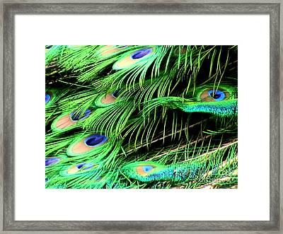 Peacock Feathers Framed Print by Toon De Zwart