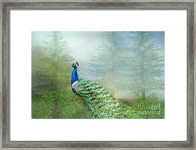 Framed Print featuring the photograph Peacock In The Forest by Bonnie Barry