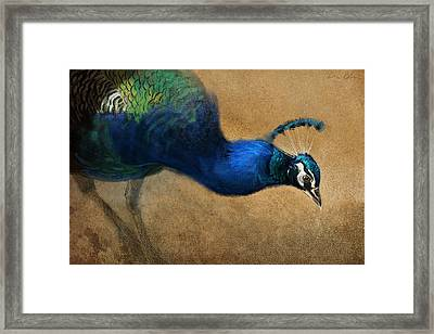 Peacock Light Framed Print