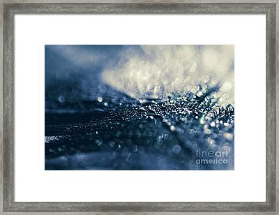 Framed Print featuring the photograph Peacock Macro Feather And Waterdrops by Sharon Mau