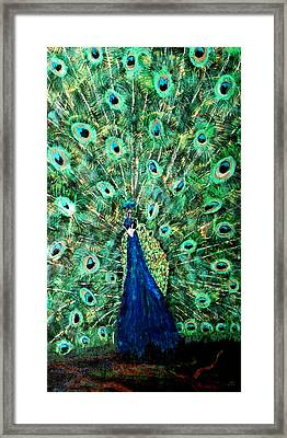 Peacock Framed Print by Mikki Alhart