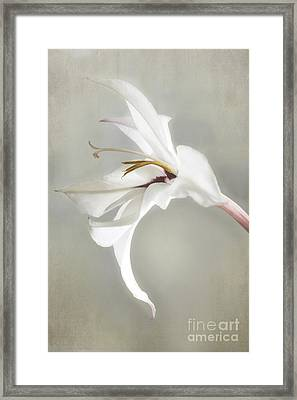 Peacock Orchid Framed Print