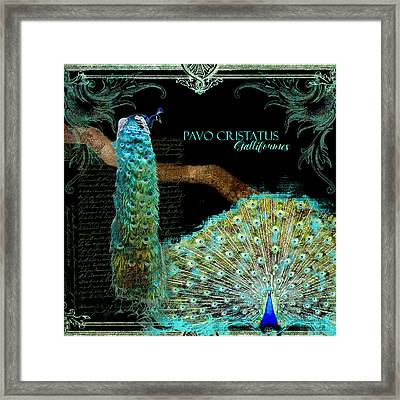 Peacock Pair On Tree Branch Tail Feathers Framed Print