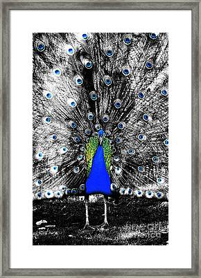 Peacock Plumage Color Splash Selective Color Ink Outlines Digital Art Framed Print