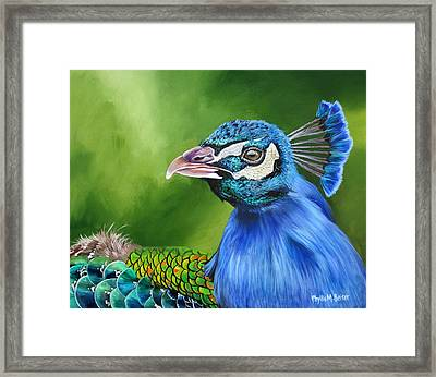 Peacock Profile Framed Print by Phyllis Beiser