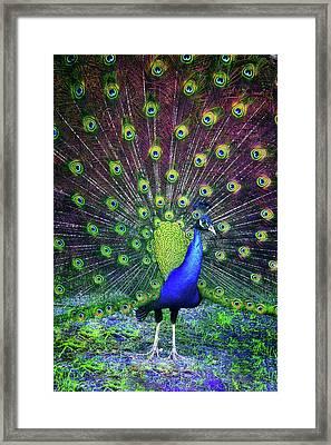 Peacock Series 9801 Framed Print