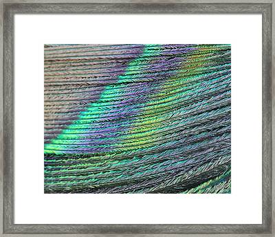 Framed Print featuring the photograph Peacock Stripes by Angela Murdock