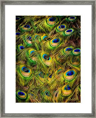 Peacock Tails Framed Print
