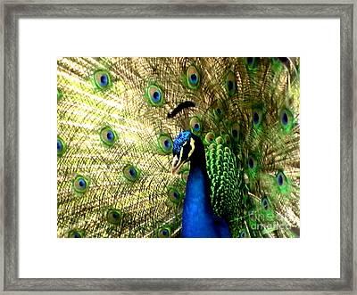 Peacock Framed Print by Toon De Zwart