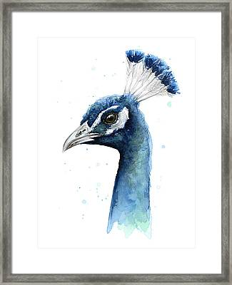 Peacock Watercolor Framed Print