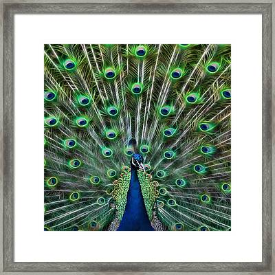 Framed Print featuring the photograph Peacocking by Joetta West