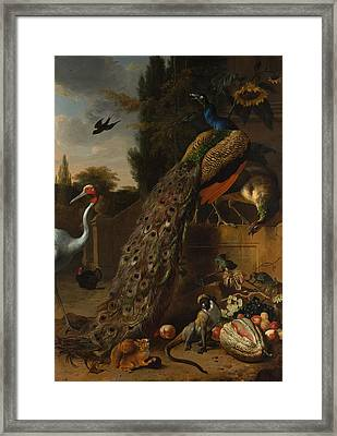 Framed Print featuring the painting Peacocks by Melchior d'Hondecoeter