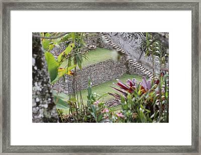 Peeking In At Machu Picchu Framed Print