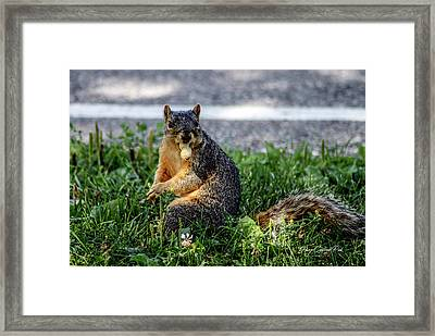 Framed Print featuring the photograph Peanut by Joann Copeland-Paul