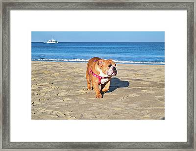 Peanut On The Beach Framed Print