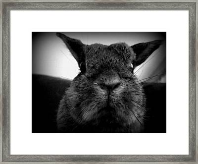 Peanut The Disapprover Framed Print by Kelly Jay