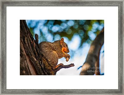 Peanut Time Framed Print by Robert Bales
