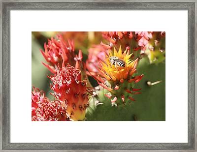 Pear Bee Framed Print