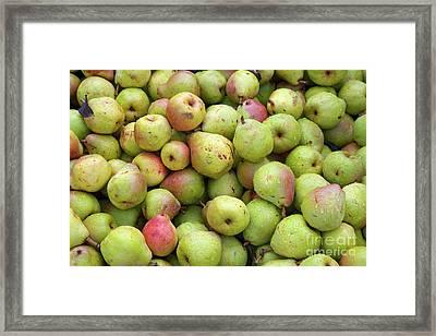 Pear Harvest Framed Print