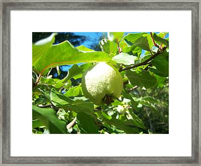 Pear Framed Print by Ken Day