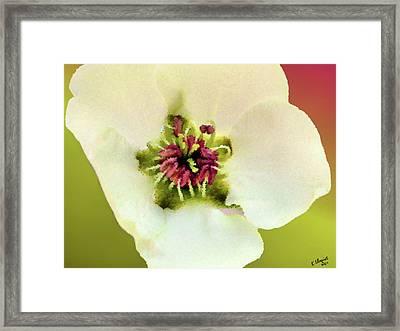 Pear Petals Framed Print by Kristin Elmquist