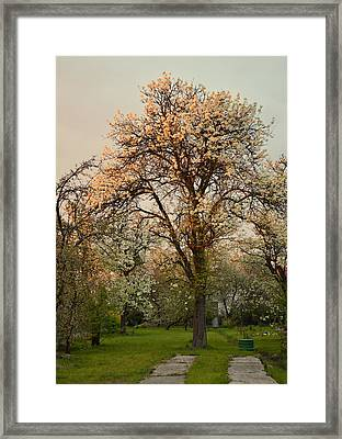 Pear Spring Sunrise Framed Print