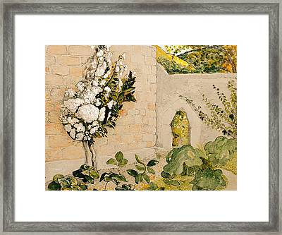 Pear Tree In A Walled Garden Framed Print