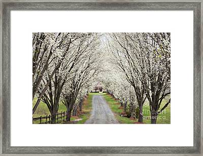 Framed Print featuring the photograph Pear Tree Lane by Benanne Stiens