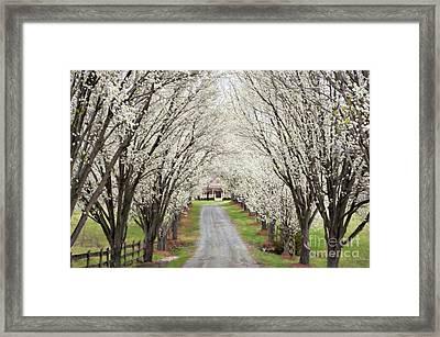 Pear Tree Lane Framed Print by Benanne Stiens