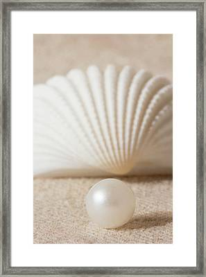 Pearl And Shell Framed Print