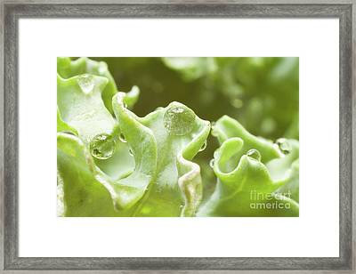 Pearls In Green Framed Print